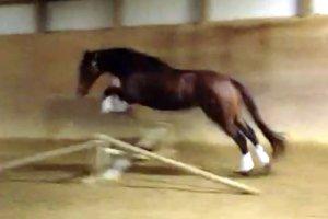 cute jump