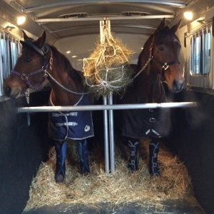 Boomer and Derby eb route to their third barn in one month. Good boys!
